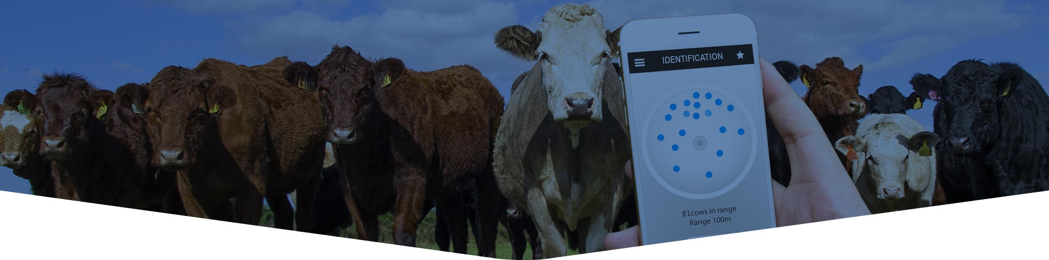 livestock identification and traceability