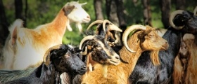 Goat Farm Maintenance Management Software