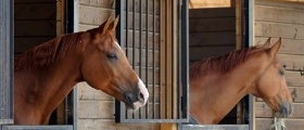 Horse Barn Maintenance Management Software