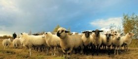 Sheep Farm Maintenance Management Software