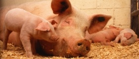 Swine Farm Maintenance Management Software