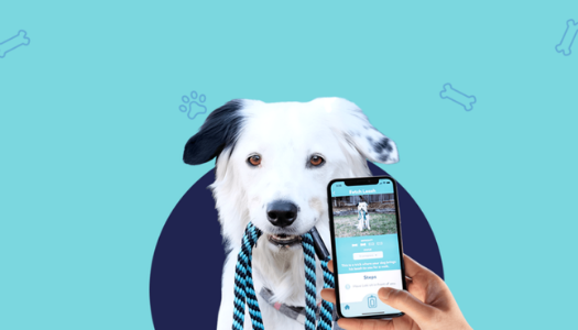 Best Apps for Dog Owners