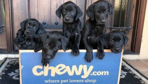 Chewy Pet Food Delivery App Development