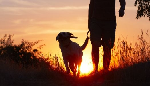 Best Dog Walking Apps for walker