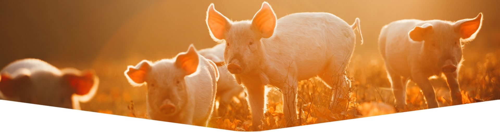 Swine Record Keeping Software Development