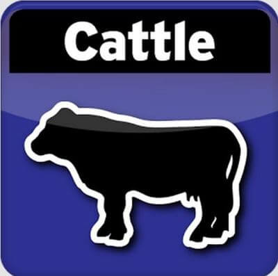 cattle breeding android calculator