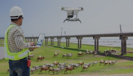 Drones in Agriculture - Crops and Livestock