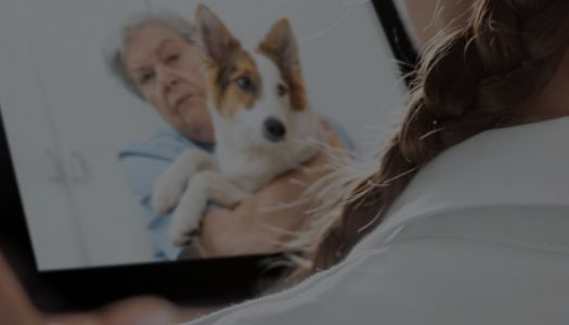 Companion Animal Diagnostics