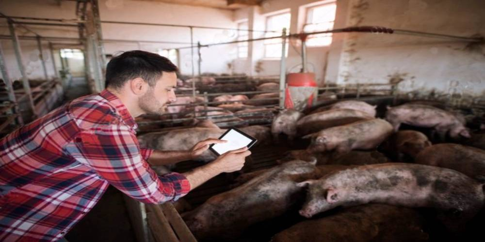 Biosecurity Management on Pig Farms