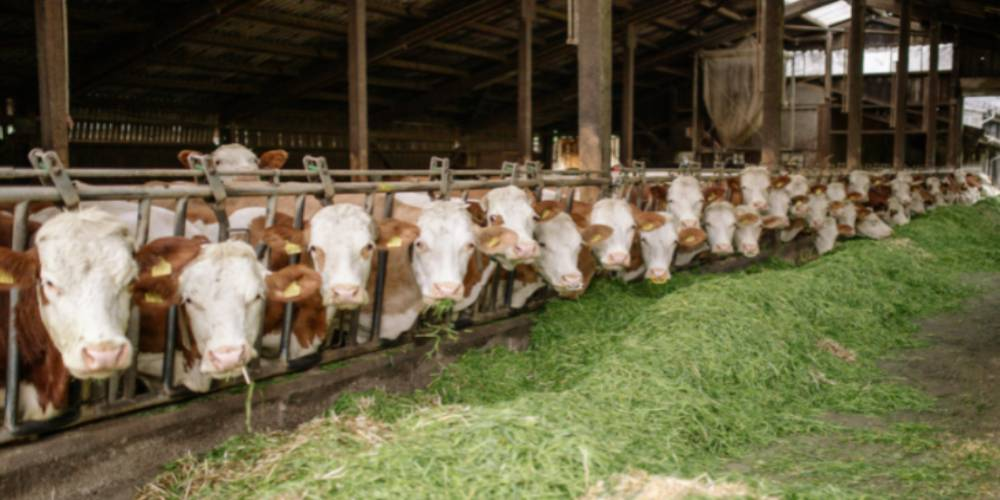 Dairy Reproduction Results