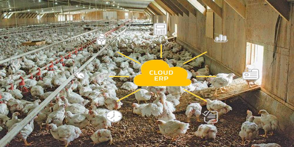 Cloud ERP for Poultry